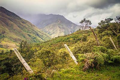 Podocarpus National Park Poster