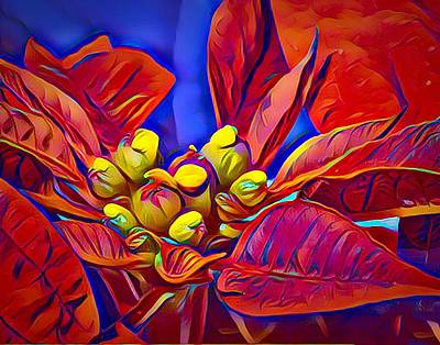 Poinsettia Closeup Poster