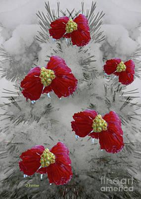 Poinsettias Dans Un Sapin Poster