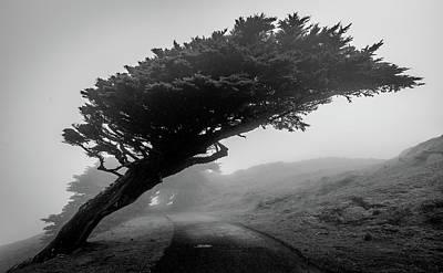 Point Reyes Fog Black And White Poster