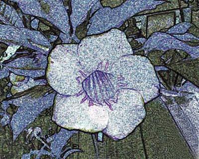 Pointilized Flower Poster by Merton Allen
