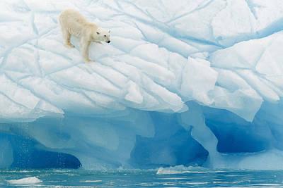 Polar Bear Poster by Joan Gil Raga
