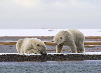 Polar Bear Zzzzzzz's Poster