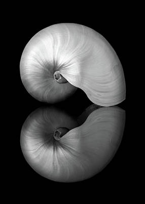 Polished Nautilus Shell And Reflection Poster by Jim Hughes