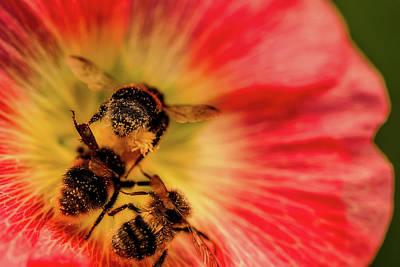 Pollination Poster by Verena - Timschenko