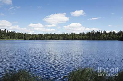 Pond In The Natural Preserve  Kladska Peats Poster by Michal Boubin
