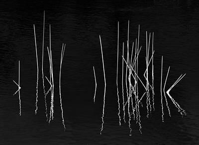 Pond Zen Poster