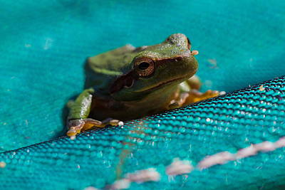 Poster featuring the photograph Pool Frog by Richard Patmore