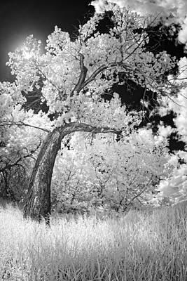 Poplars Under The Sun Poster