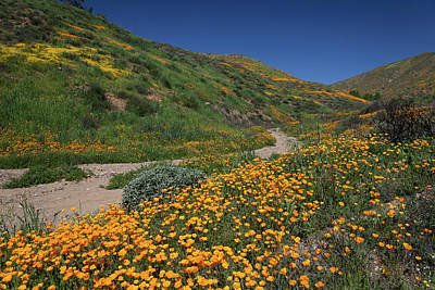 Poster featuring the photograph Poppies Along Riverbed by Cliff Wassmann