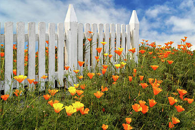 Poster featuring the photograph Poppies And A White Picket Fence by James Eddy