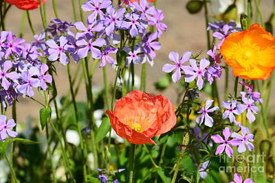 Poppies And Purple Flox Poster by Maria Urso