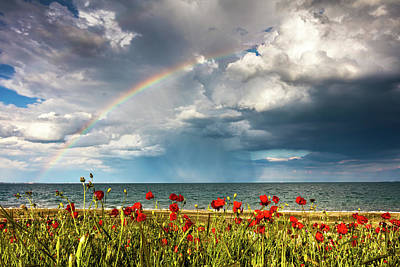 Poppies And Rainbow By The Sea Poster