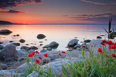 Poppies By The Sea Poster by Evgeni Dinev