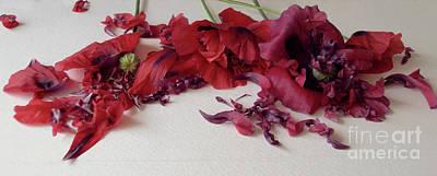 Poppies Petals Poster