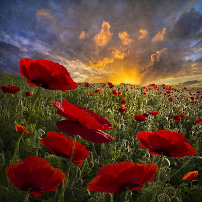 Poppy Field Poster by Debra and Dave Vanderlaan