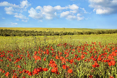 Poster featuring the photograph Poppy Fields by Marion McCristall