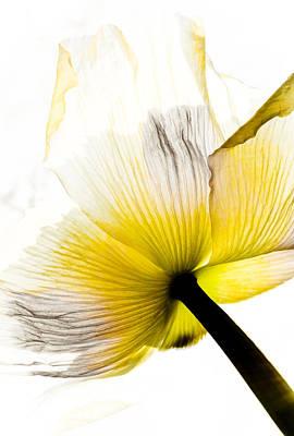 Poppy Flower Art Poster by Frank Tschakert