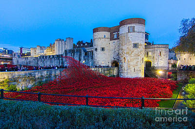 Poppy Flowers Tower Of London Poster