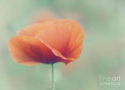 Poppy Poster by Janet Burdon