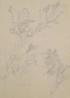 Poppy Leaves Poster
