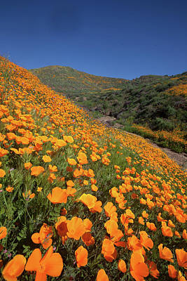 Poster featuring the photograph Poppy Superbloom Vertical by Cliff Wassmann