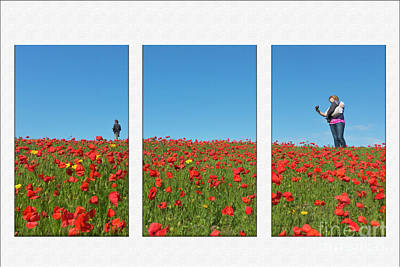 Poppy Triptych Poster by Terri Waters