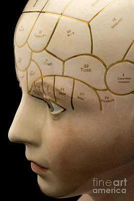 Porcelain Phrenological Head, 19th Poster