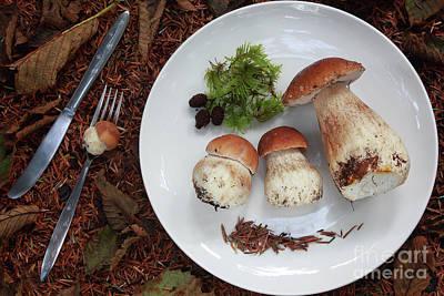 Porcini Mushrooms Poster