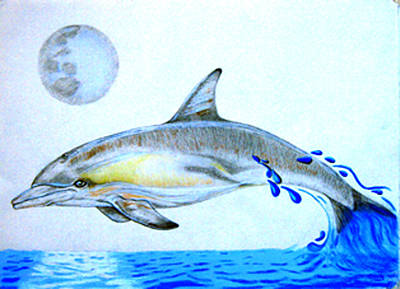Poster featuring the drawing Porpoise by Mayhem Mediums