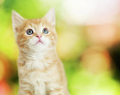 Portrait Cute Kitten Blurred Scenic Background Poster