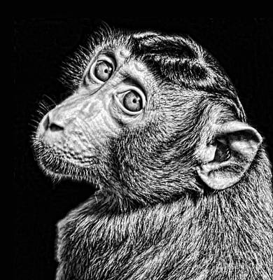 Portrait Of A Baby Monkey II Black And White Version Poster