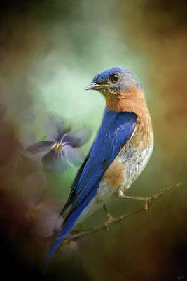 Portrait Of A Bluebird Poster
