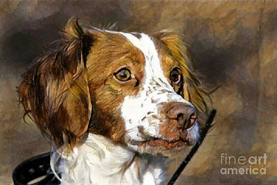 Poster featuring the photograph Portrait Of A Brittany - D009983-a by Daniel Dempster