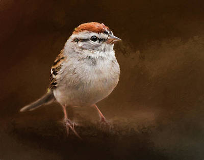Portrait Of A Chipping Sparrow Poster