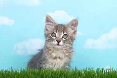 Portrait Of A Fluffy Gray Kitten Poster