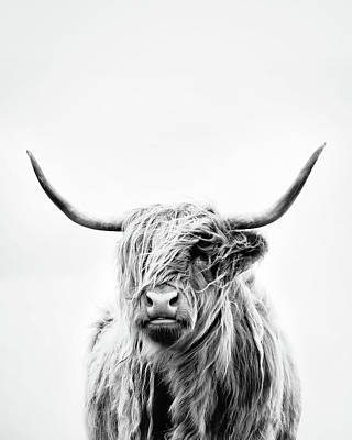 Portrait Of A Highland Cow - Vertical Orientation Poster