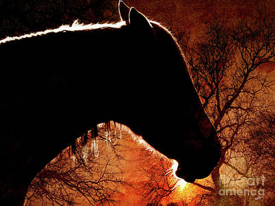 Portrait Of A Horse Poster by Callan Percy