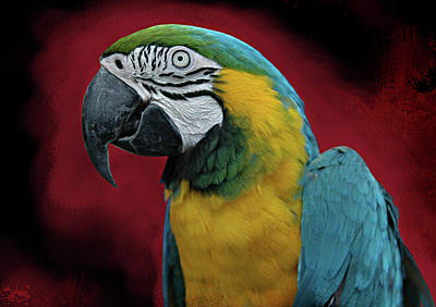 Poster featuring the photograph Portrait Of A Parrot by Jeff Burgess