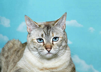 Portrait Of A Skeptical Lynx Cat Poster