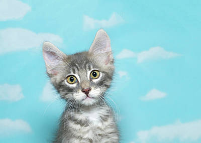 Portrait Of A Tiny Tabby Kitten Poster