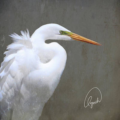 Portrait Of An Egret Signed Poster