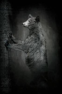 Portrait Of Black Bear Resting Against Tree Poster
