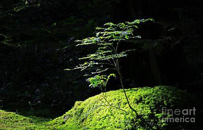 Portrait Of Two Tree Seedlings Poster