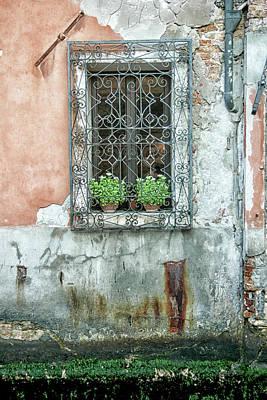 Pot Plant Window Poster