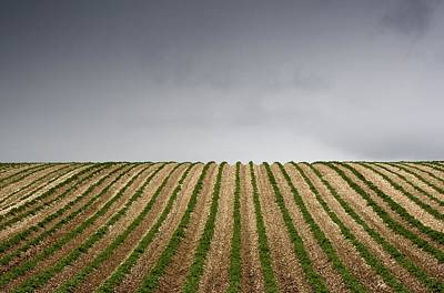 Potato Field Poster by John Short