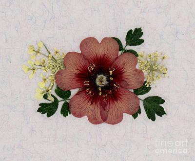 Potentilla And Queen-ann's-lace Pressed Flower Arrangement Poster