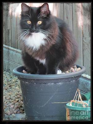 Potted Cat Poster