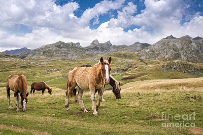 Pourtalet Pass Poster by Delphimages Photo Creations