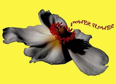 Power Flower Anemone Poster
